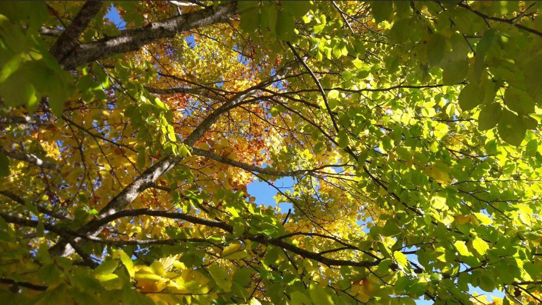 Energie d'automne